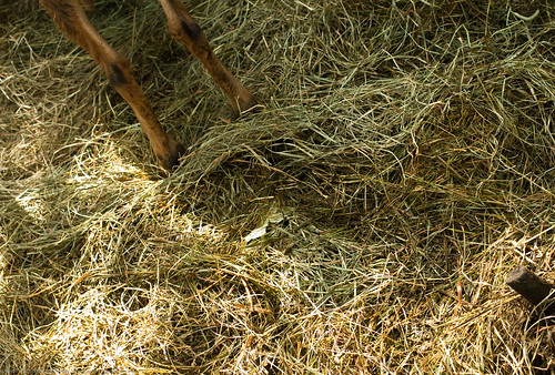 Humble Garden 2009: hay over unmentionable yuck | by nikaboyce