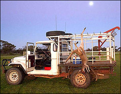 Kangaroo, Ute, Moon | by Jeff.Simmermon
