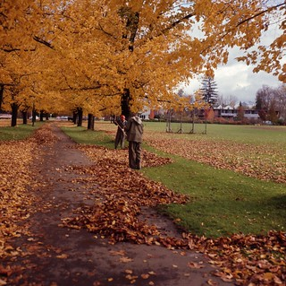 Two men raking leaves | by OSU Special Collections & Archives : Commons