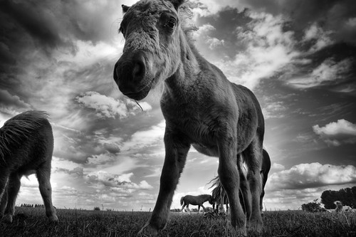 Filly in black and white | by Dirk Delbaere