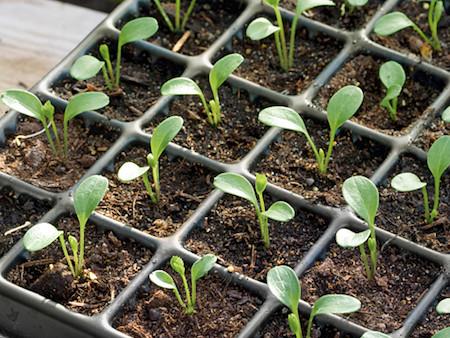 seed_start