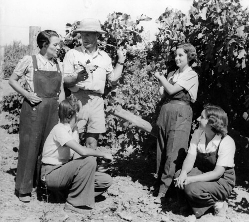 Vine pruning lessons | by State Library of South Australia