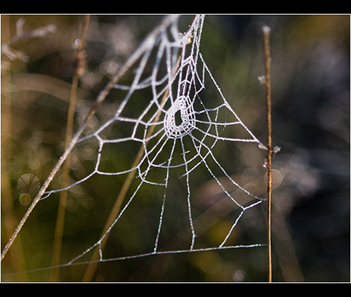 Spider's Home | by almoko
