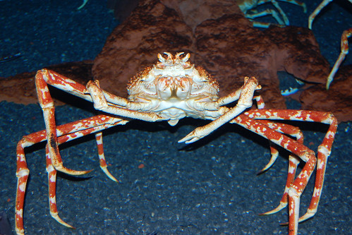 king_crab | by dain of the iron hills