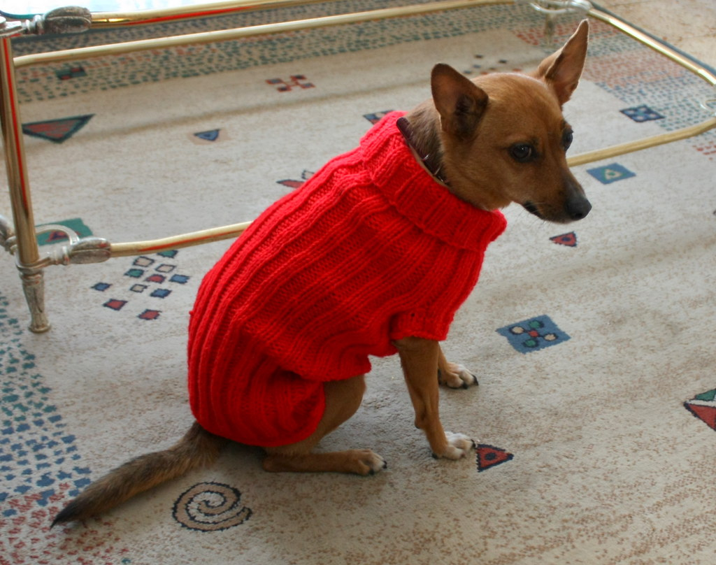 Free Dog Sweater Knitting Pattern In The Round