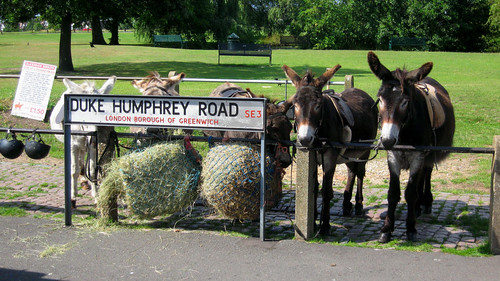 Blackheath Donkeys | by Soggy Semolina