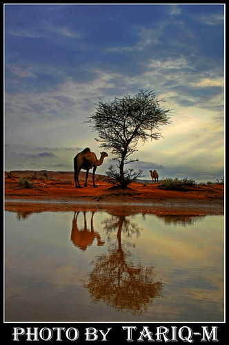 Camel reflection HDR | by TARIQ-M