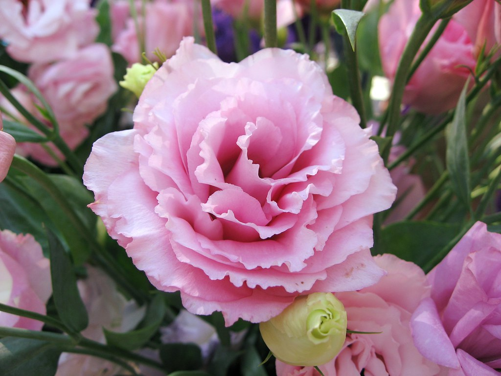 Доброе утро цветок фото