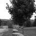 tree (81)
