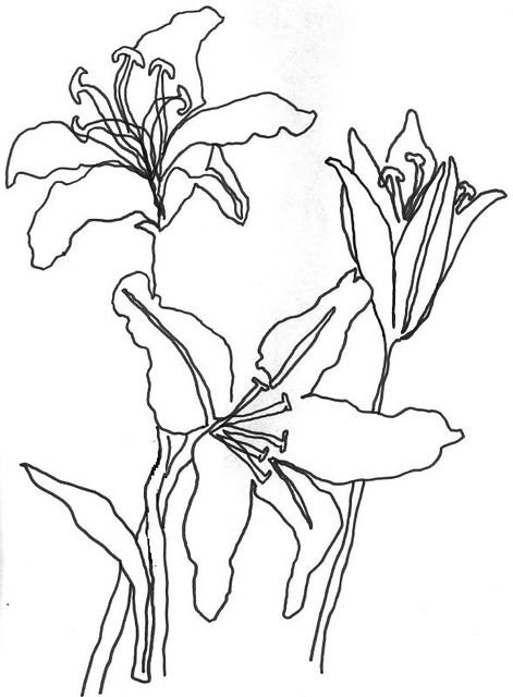 Vector Line Drawing Flower Pattern : Continuous line drawing in a couple of minutes