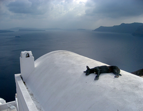 doggy bliss on a roof | by potomacpix