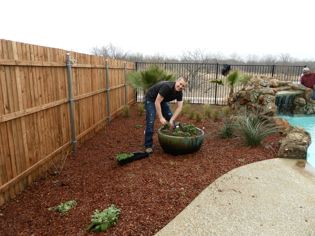 Plants Around Pool Landscape Design Corinth Installing A