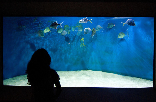Newport Aquarium Ky Flickr Photo Sharing
