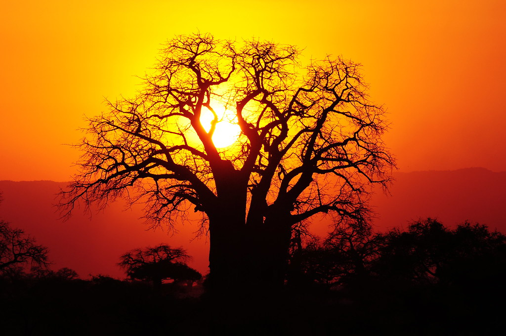 The Sunset Of Your Dreams The Dusty Skies Of Tarangire