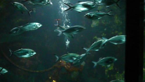 Aquarium saint malo grand aquarium de saint malo en for Achat grand aquarium