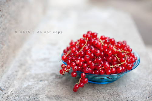 red berries... | by meandmypictures