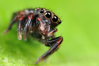Jumping Spider | by xbn83