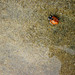 the ladybug we rescued