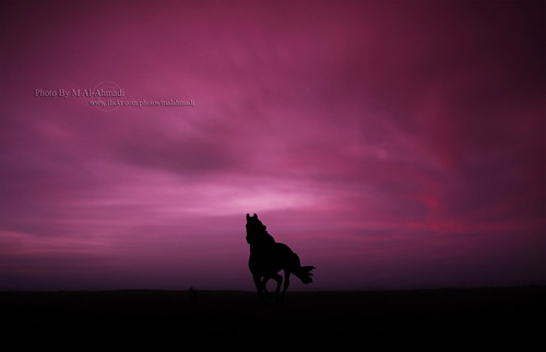 Horse In Dreamy World | by MJ ♛