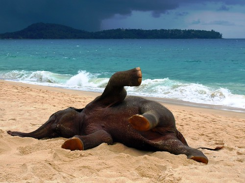 Phuket Elephant on the Beach | by John Lindie