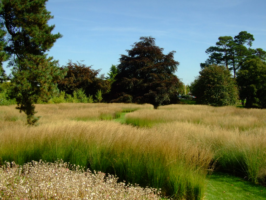 Trentham gardens piet oudolf 39 s rivers of grass for Planting design piet oudolf
