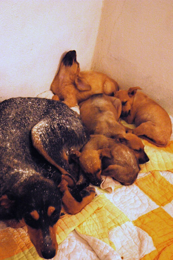 All 5 Dogs Are Captured And Rescued 4 Puppies And Momma
