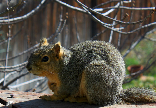 Hello Squirrel | by Toria Clark