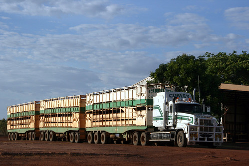 Curley Cattle Transport Mack Prime Mover 02 Cct 3 Traile