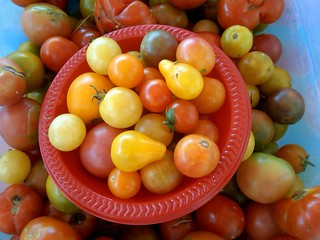 The best tomatoes in Louisville | by Dana McMahan