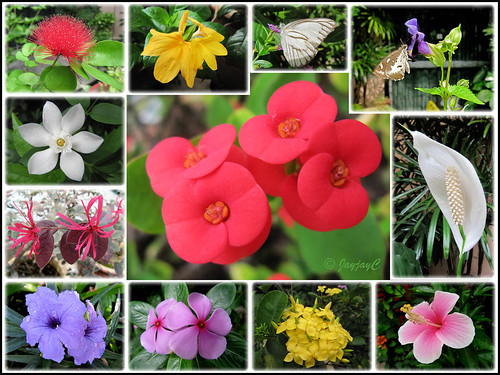 Plants In The Tropical Rainforest Collage Collage of flowers and...