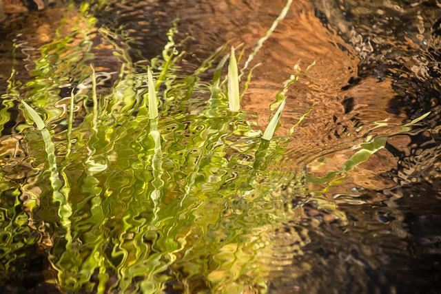plant under water