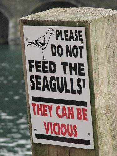Please do not feed the seagulls | by oh_simone