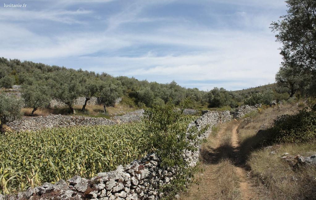 Parcelles délimitées par des murs en pierre sèche