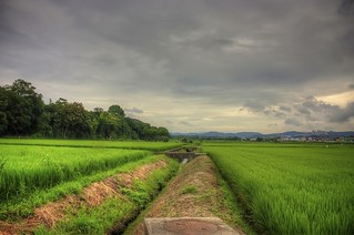 Rice fields and foot bridges | by JapanDave
