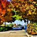 Fall In Port Credit