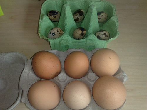 i took choc eggs to my nephs and came away with real eggs from their hens :-) they now have quail too! | by Andy2Boyz