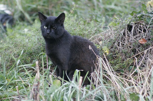 Feral Cat Rescue Tucson