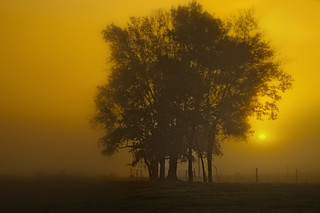 Foggy Morning Sunrise | by Anne Strickland