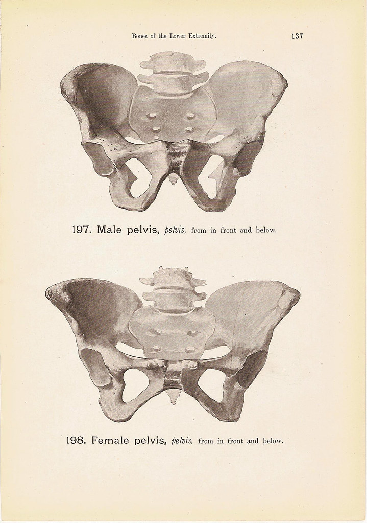 Female And Male Pelvis Bones Anatomy Print Black And White Flickr