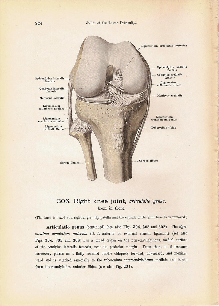 Right KNEE Joint Double-Sided Anatomy Print Steel Engravin… | Flickr