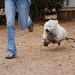 Flying doggie!