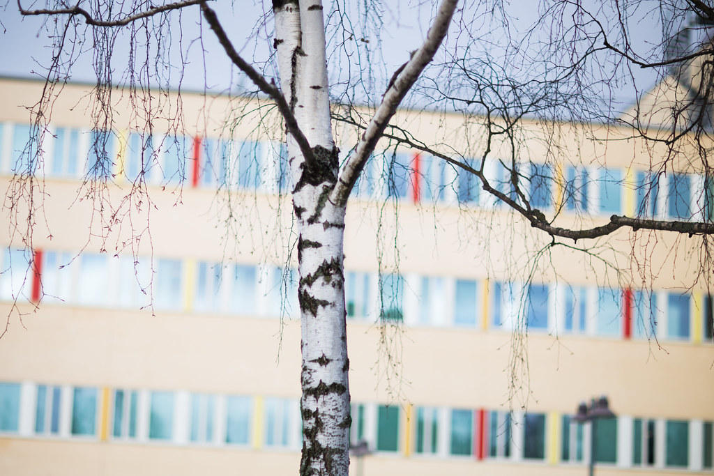 birch and rainbow