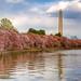 Washington, DC - Cherry Blossom Festival