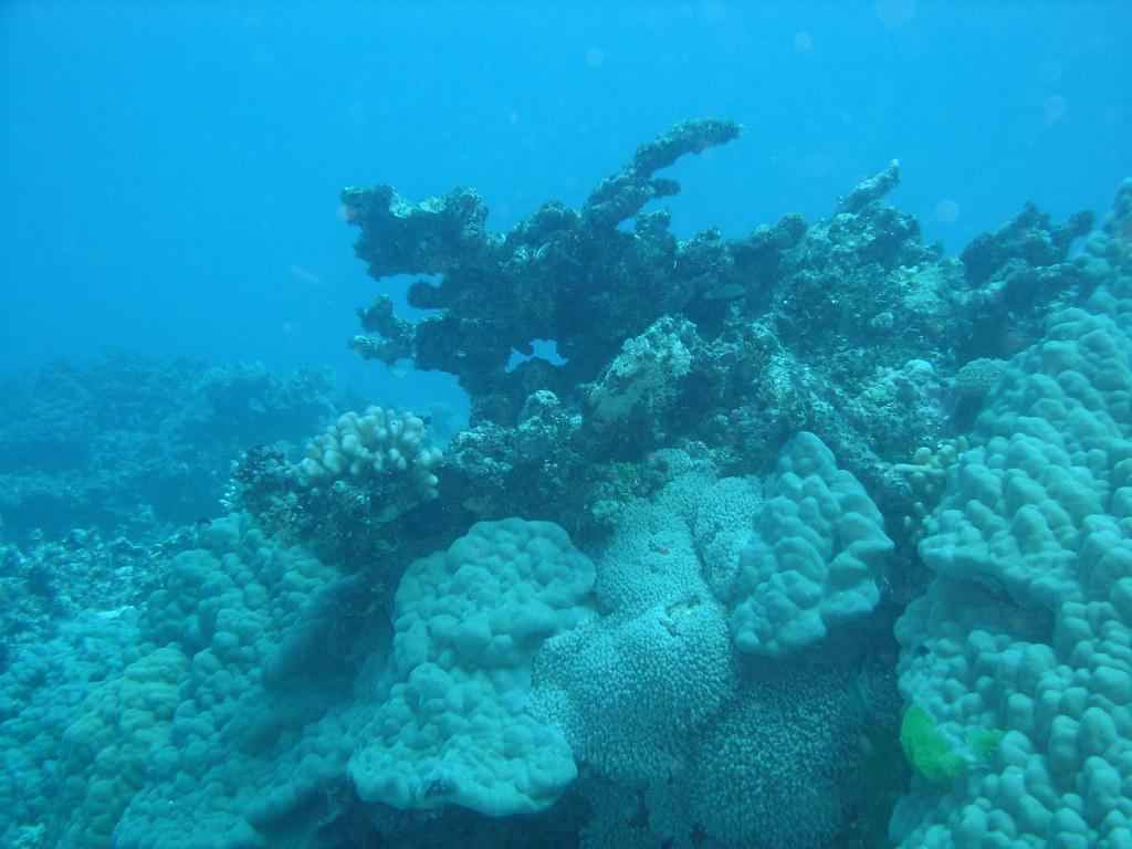 reefs day debacle - photo #15