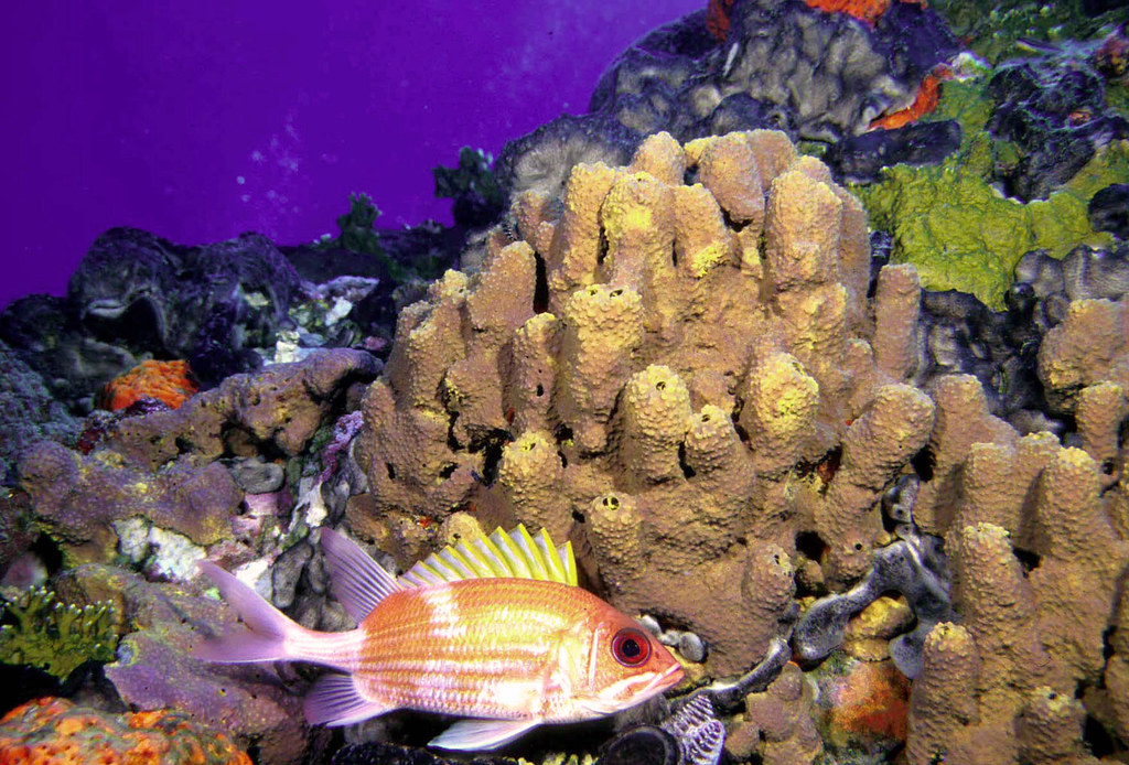 Coral Garden Sponges And Corals In Flower Garden Banks Nat Flickr