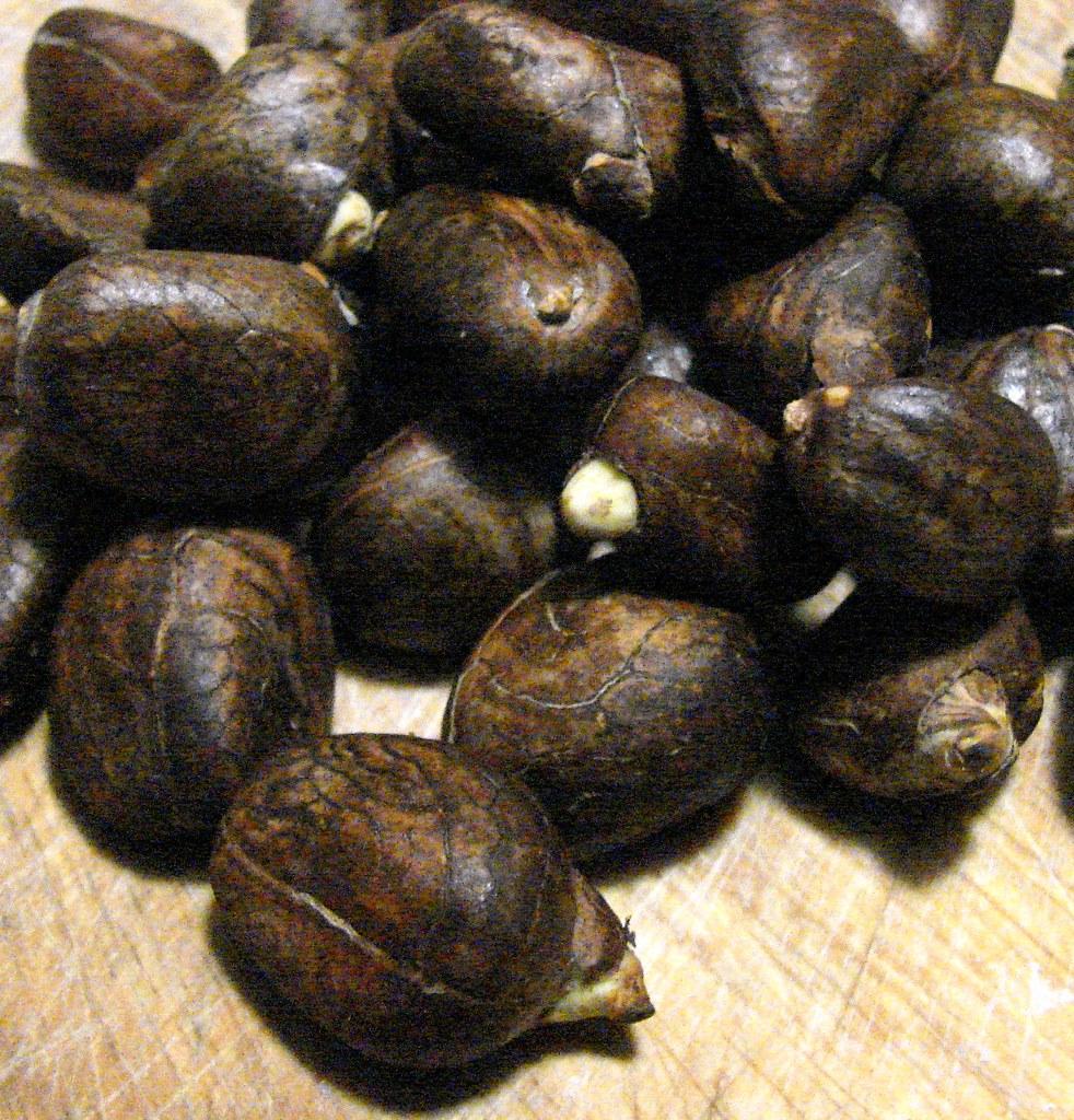 breadfruit seeds 1 | daves cupboard | Flickr