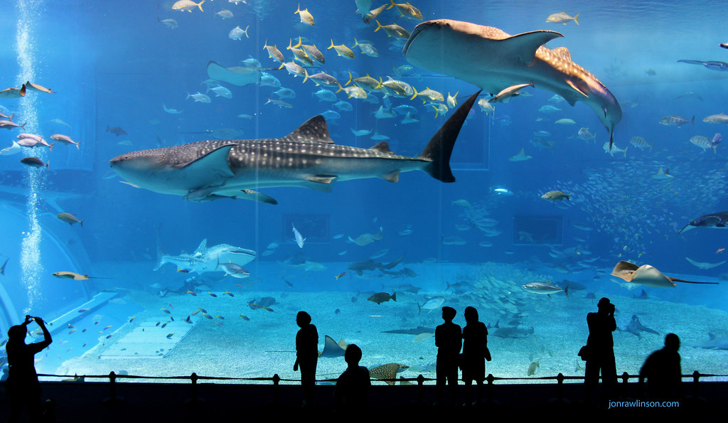 kuroshio sea 2nd largest aquarium tank in the world flickr