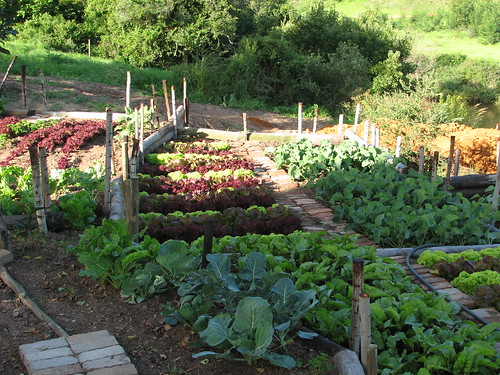 Organic garden garden route south africa the chefs for Vegetable garden designs south africa