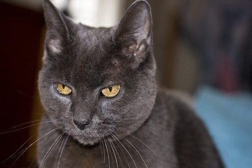 grey cat face | by Muffet