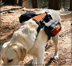KURGO Wander Back Pack | by Furry Travelers